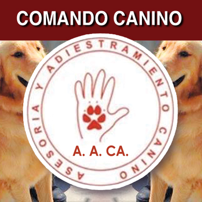 adiestramiento-canino-asesoria