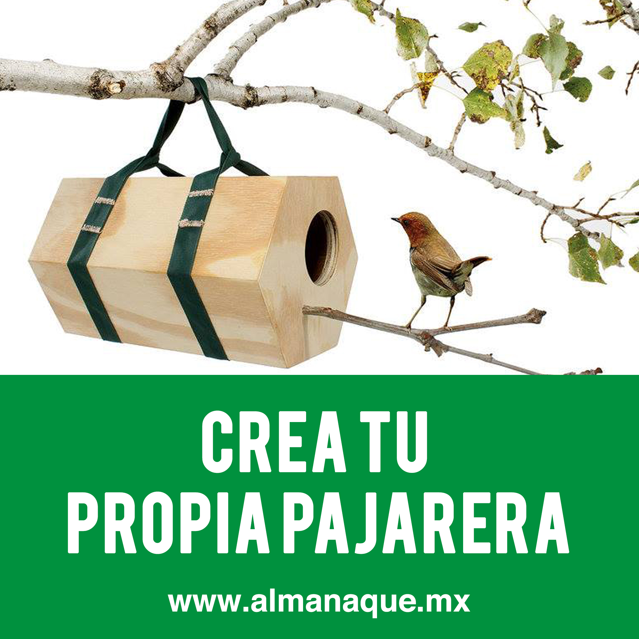 maderas-hidalgo-pajarera-blog-almanaque-mx